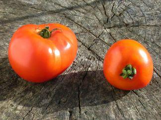 http://www.essaime-artomate.be/images/CaroredASbis72.JPG